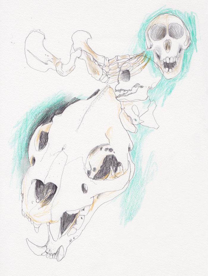 schedels_700w
